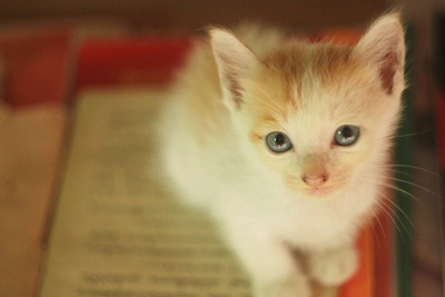 ความลับของคุณแมว