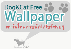 free dog&cat wallpaper   